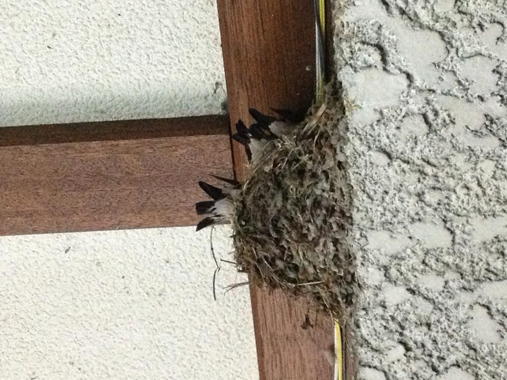 商店街のツバメの巣
