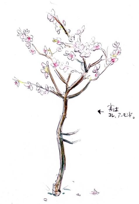 桜ではありません